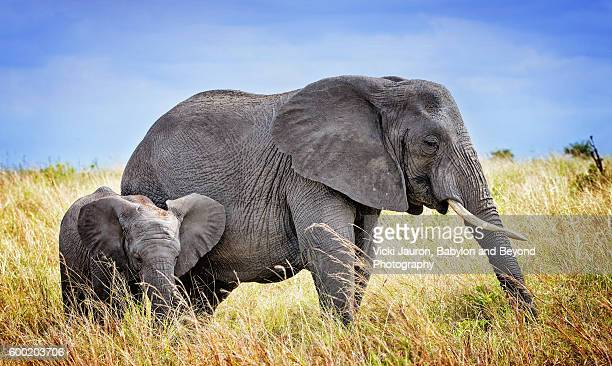 Mother and Young African Elephant in Tarangire, Tanzania