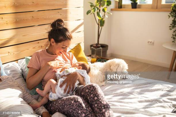 mother breastfeeding baby boy on sunny morning - woman breastfeeding animals stock photos and pictures