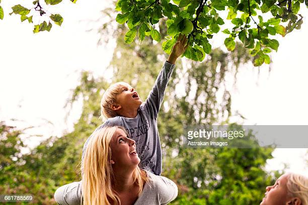 mother carrying son as he plucks an apple in yard - appelboom stockfoto's en -beelden