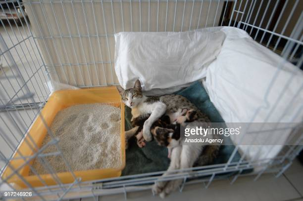 Mother cat is seen with her newborn kittens at a veterinary clinic on February 06, 2018 in Antalya, Turkey. Emre Demir, a vet from Turkey's Antalya,...