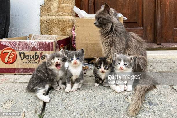 Mother cat sits with her kittens outside a home along a street in the old walled city of Cyprus' capital Nicosia on April 7, 2021.