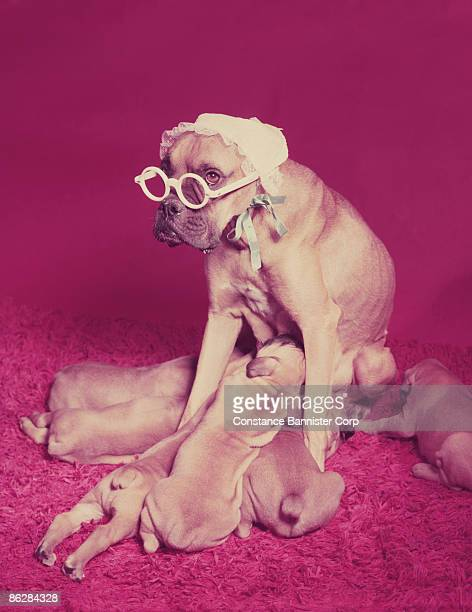 Mother dog with glasses feeding puppies