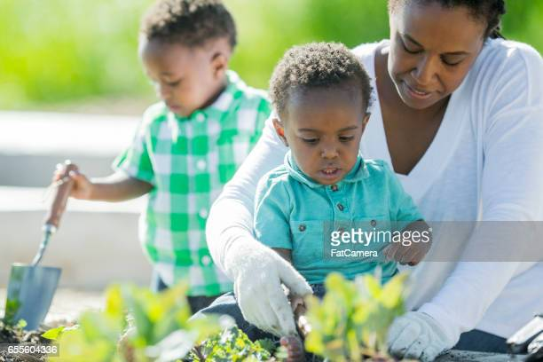 Mother Gardening with Her Sons