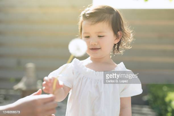 mother hands dandelion to her daughter in a garden in a sunny spring day - white dress stock pictures, royalty-free photos & images