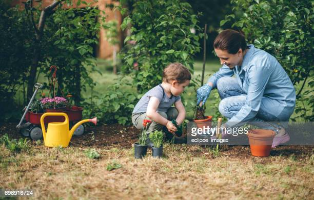 mother helping young boy in gardening and planting - vegetable garden stock pictures, royalty-free photos & images
