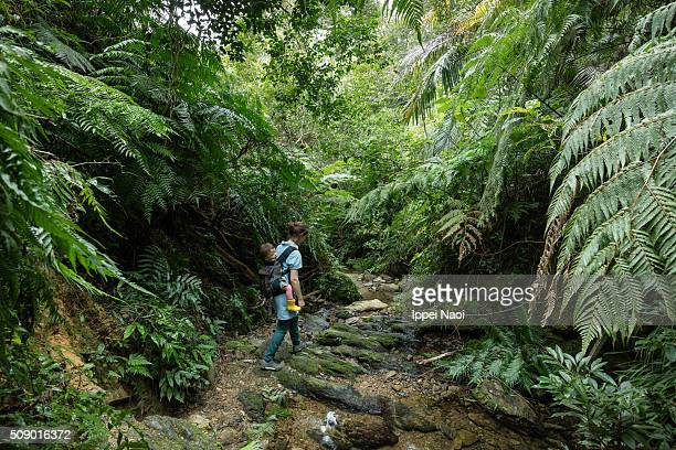 Mother hiking with her baby in rainforest, Okinawa, Japan