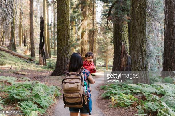 mother holding a little girl in the forest in sequoia national park, california, usa - north america stock pictures, royalty-free photos & images