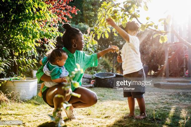 mother playing with her children in garden - focus on background stock pictures, royalty-free photos & images