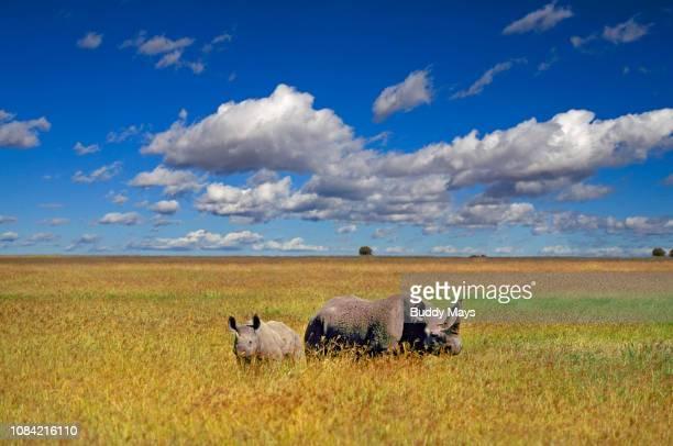 Mother Rhinocerous and calf in Tanzania