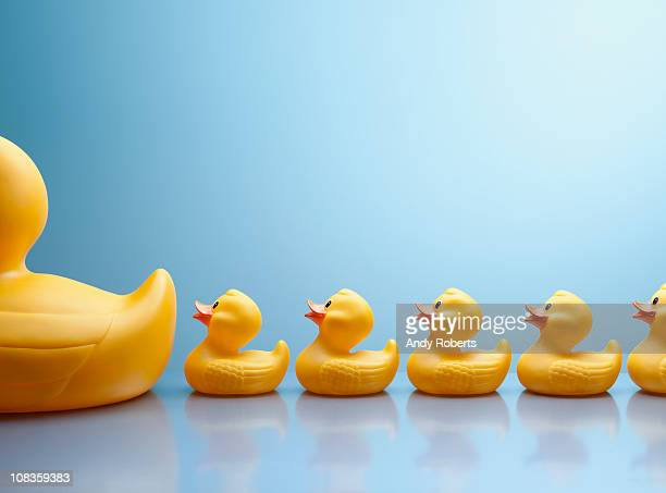 mother rubber duck leading several rubber ducklings - duck bird stock photos and pictures