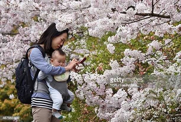 A mother tries to take pictures with her smartphone under cherry blossoms in full bloom in Tokyo on March 29 2015 Many people in the Japanese capital...
