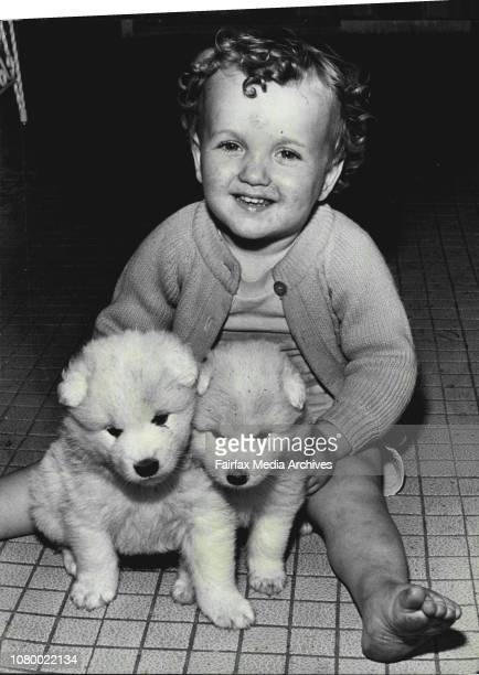 Mother was taken from them on TuesdayEenie Meenie Miney adn Moe are four fluffy 24yearold Samoyed pupsThey could be dead by tomorrow from...
