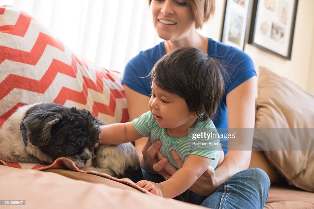 Mother watching baby playing with pet dog on sofa : Stock Photo
