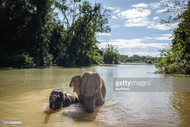 Mother with a three year old baby at the water hole in the Elephant Conservation Center, Sayaboury, Laos, in December 2018. Laos was known as The...