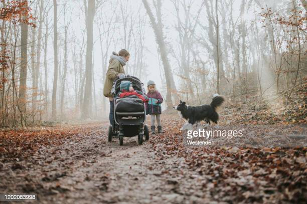 mother with daughters and border collie during forest walk in autumn - pushchair stock pictures, royalty-free photos & images