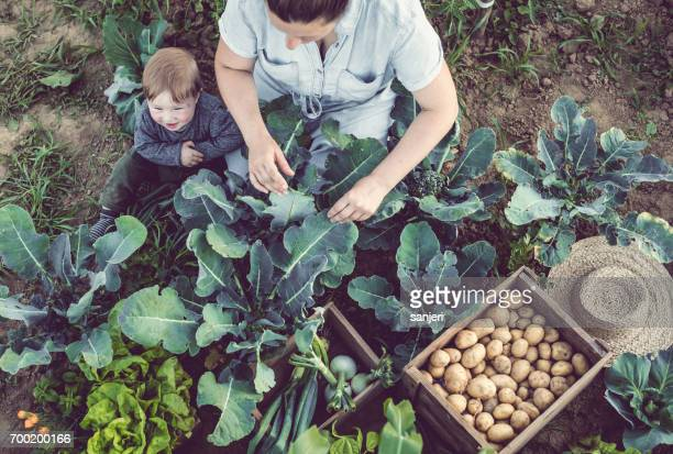 Mother With Son Sitting in a Vegetable Home Grown Garden
