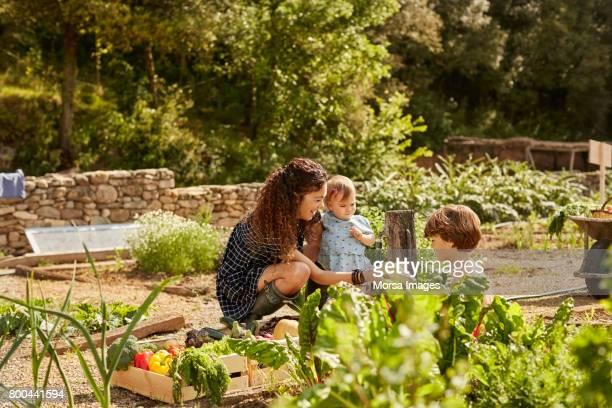 mère avec enfant donnant des légumes pour garçon - jardin potager photos et images de collection