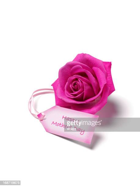 mother's day label and pink rose - mothers day card stock pictures, royalty-free photos & images