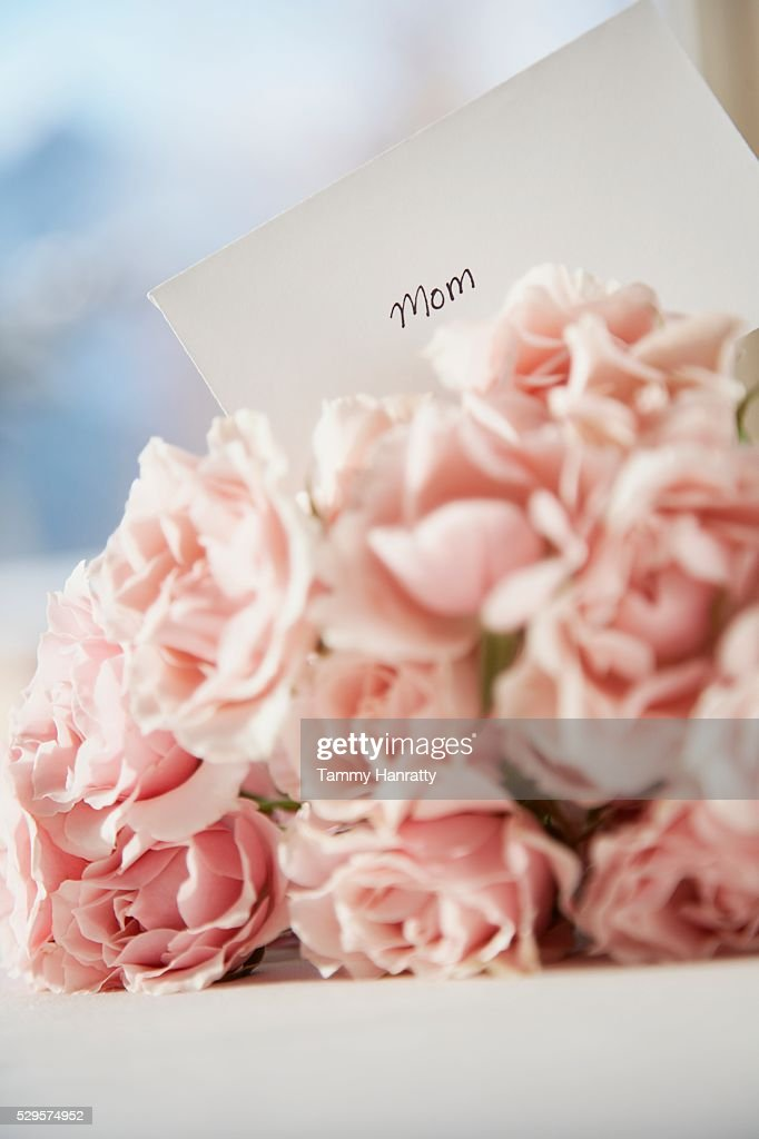 Mother's Day Roses : Stock Photo