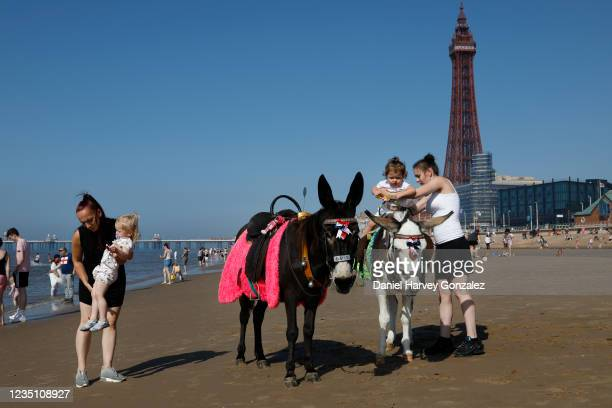 Mothers try to get their toddlers to ride one of Blackpool's famous donkeys, one of the beach's most popular attractions, with the world famous...