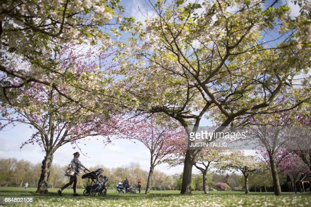 Mothers wheel their babies in prams under the blossoms on a sunny morning in Battersea Park in London on April 5 2017 / AFP PHOTO / Justin TALLIS