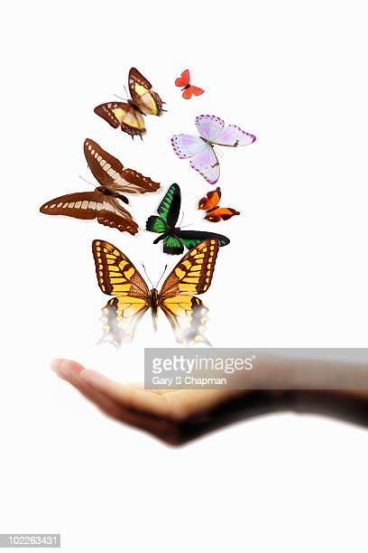 moths and butterflies above female hand - releasing stock photos and pictures