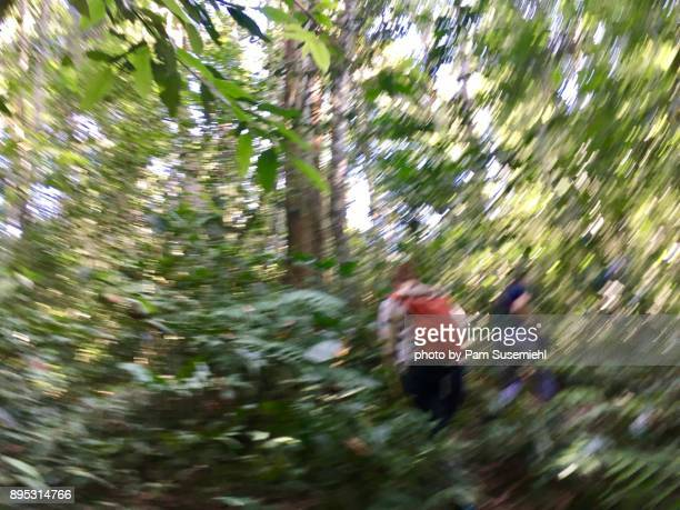 Motion Blurred Forest Hike