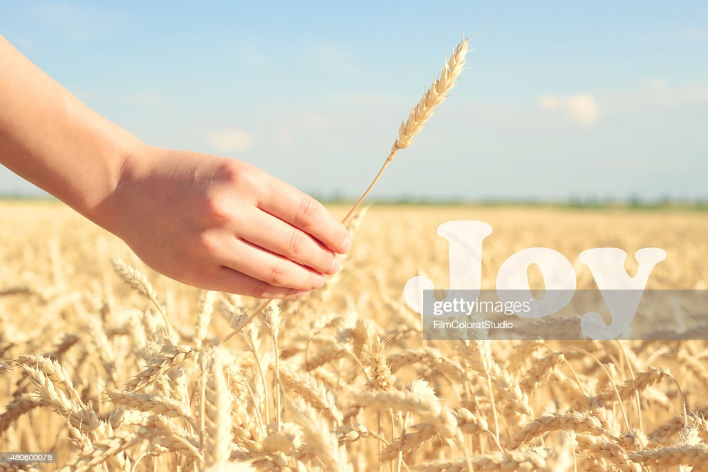 Motivational wheat field. : Stock Photo