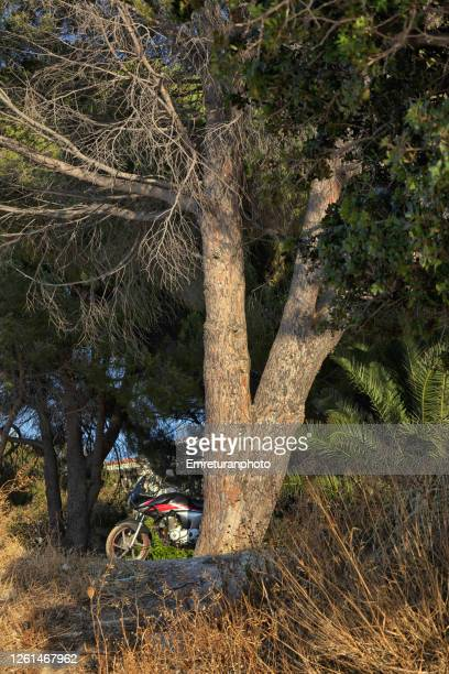 motorbike parked under a pine tree on a sunny day,ildir village. - emreturanphoto stock pictures, royalty-free photos & images