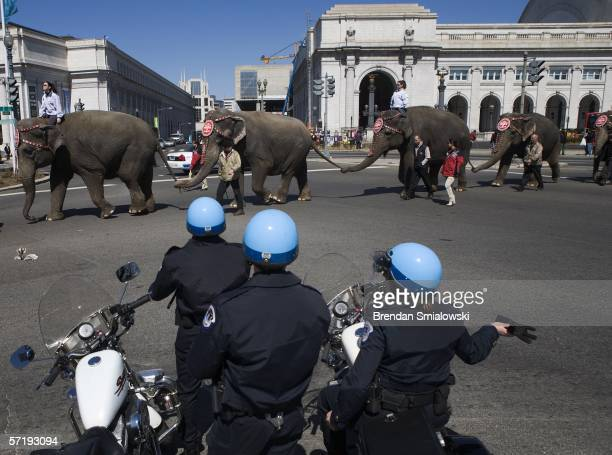 Motorcycle police watch as elephants pass Union Station while walking along Massachusetts Avenue during a parade from the DC Armory to the Verizon...