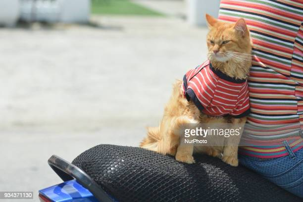 A motorcyclist carries a cat 'Kit' in Kota Bharu city center near the finish line of the second stage of Le Tour de Langkawi 2018 On Monday March 19...