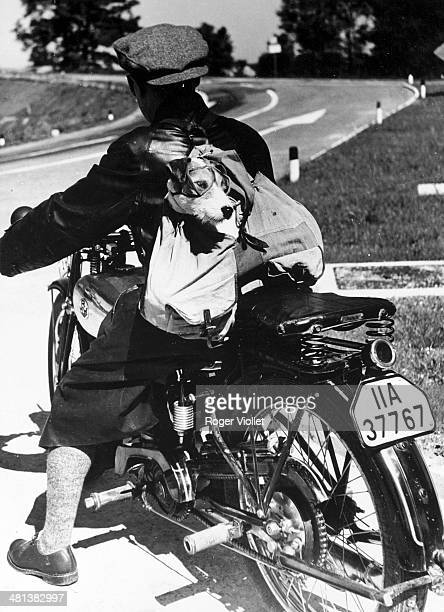 Motorcyclist driving a BMW in Germany with a fox terrier in his backpack circa 19351936