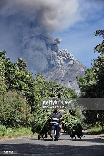 A motorcyclist transports fresh grass as clouds of ash continues to spew out of the Mount Merapi eruption in Sleman on November 12 2010 Indonesia's...