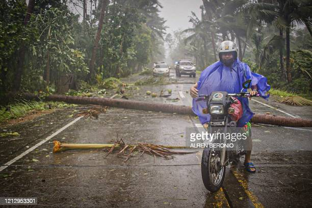 A motorist braving rains and strong wind maneouvers along a highway littered with fallen coconut trees in Canavid town Eastern Samar province central...