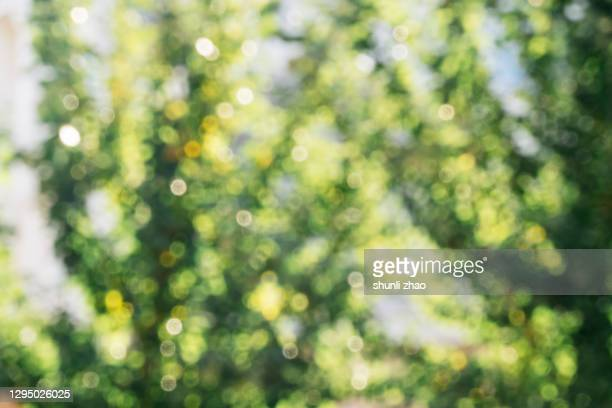 mottled light and shadow among the trees - flouté photos et images de collection
