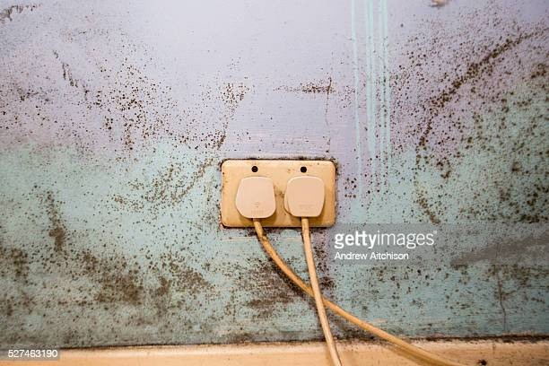 Mould on a bedroom wall Damp is a common cause of mould in housing leading to breathing problems SHINE is a onestop referral system for children and...