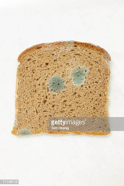 Moulded bread
