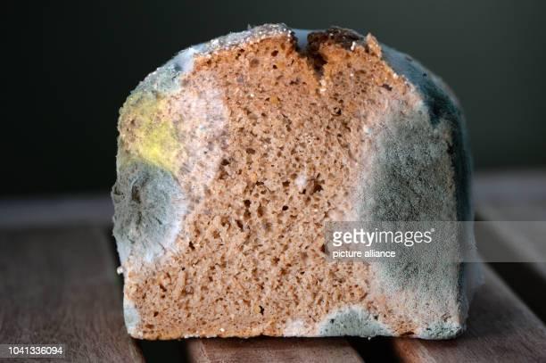 Mouldy bread in Berlin Germany 04 September 2014 Photo JENSKALAENE/dpa | usage worldwide