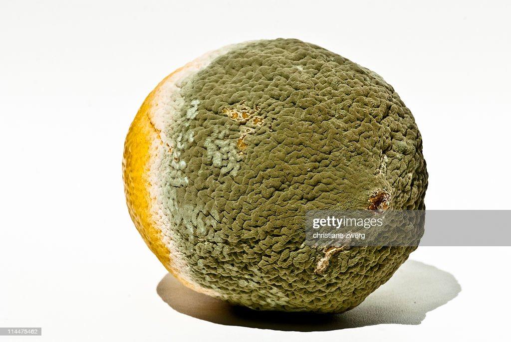 Mouldy fruit : Stock Photo