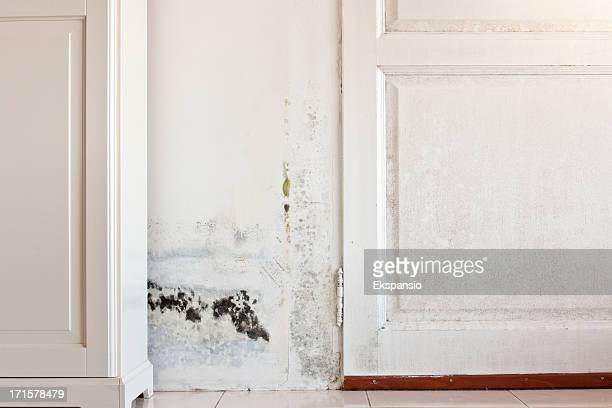 Mouldy Schimmel Flecken auf einem feuchten Tür und Wand hinter Schrank