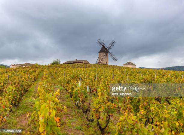 moulin-a-vent and vineyards in beaujolais wine growing area, france - beaujolais nouveau stock pictures, royalty-free photos & images