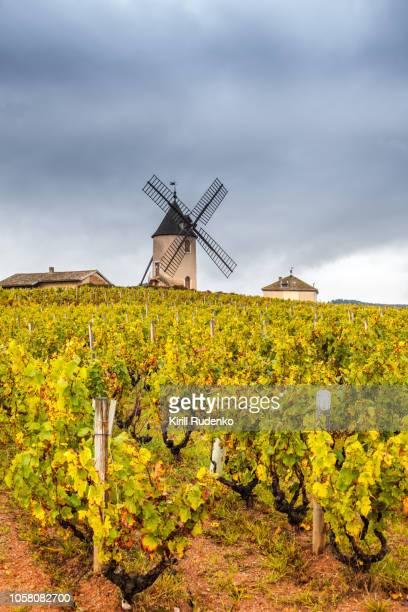 moulin-a-vent and vineyards in beaujolais wine growing area, france - rhone stock pictures, royalty-free photos & images