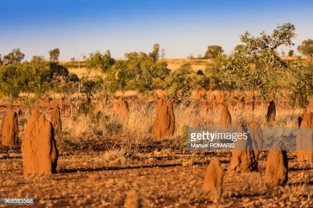 mound builders, barkly, queensland, australia - termite photos et images de collection