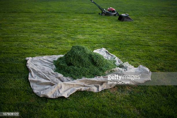 mound of fresh cut grass - heap stock pictures, royalty-free photos & images