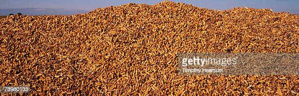 Mound of freshly harvested peanuts