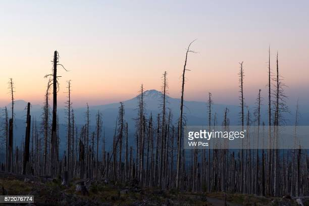 Mount Adams is seen from the slopes of Mount Hood Oregon United States