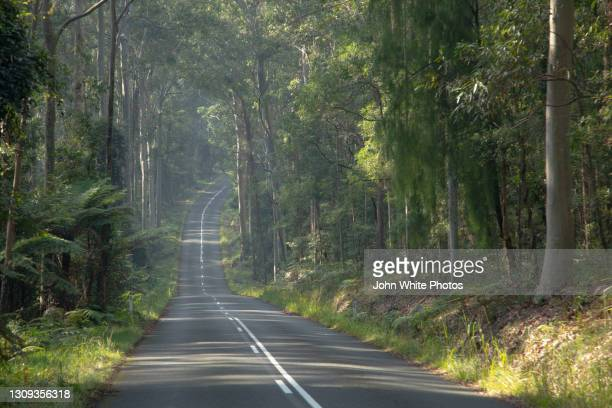 mount agony road though murramarang national park. new south wales. australia. - batemans bay stock pictures, royalty-free photos & images