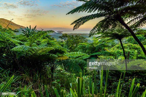 mount alexandra lookout at daintree rainforest - queensland stock pictures, royalty-free photos & images
