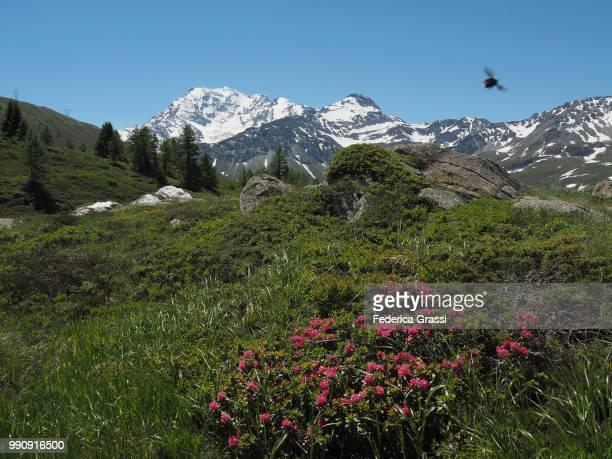 Mount Breitloibgrat Seen From Simplon Pass