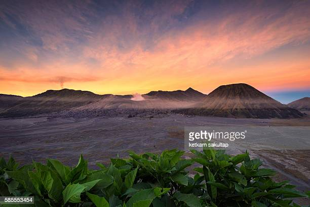 mount bromo at sunrise, east java, indonesia. - mt semeru stock pictures, royalty-free photos & images